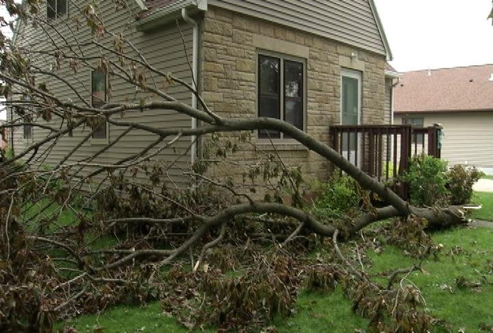 The Hammers' family home was almost hit by a ginormous branch during Wednesday's tornado in Elgin.
